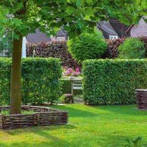 Зелений паркан з Граба Екстра 100-125см (1мп)